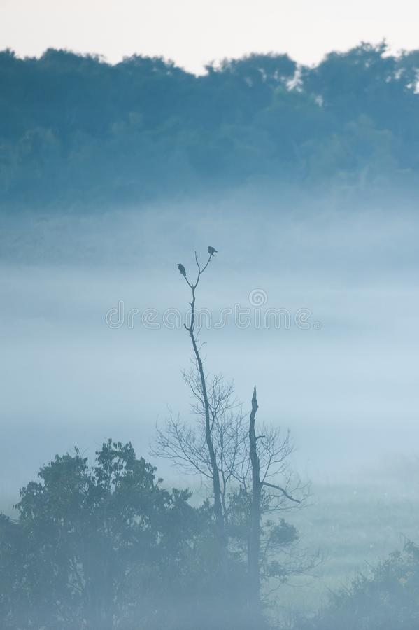 Couple birds breeding in the tree and the mist. Winter Season. Phukaew Wildlife Sanctuary, Thailand. mountain and tropical forest royalty free stock photo