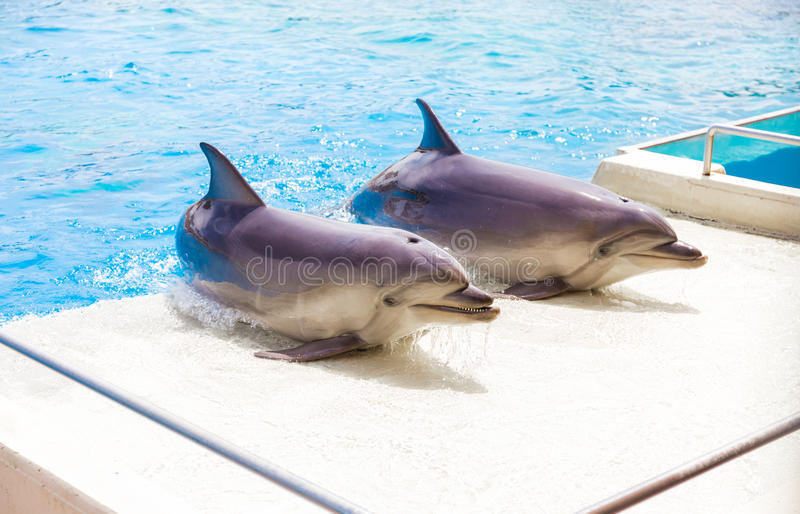 Couple of bottle nose dolphins in Attica Zoo stock images