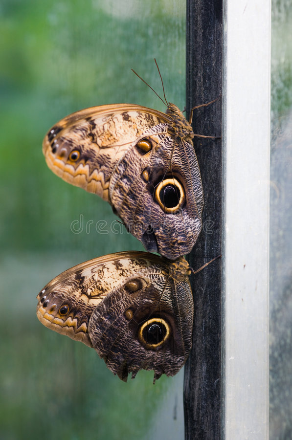 Couple of butterflies on the frame stock image