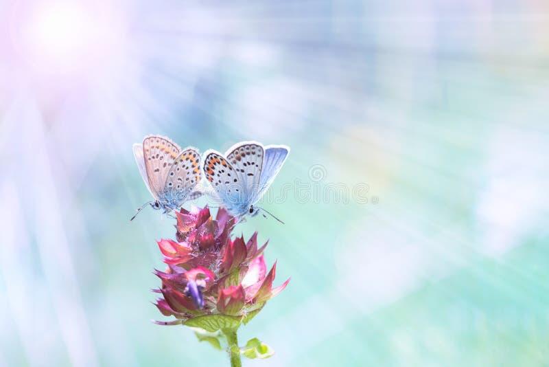 Couple of butterflies stock photo