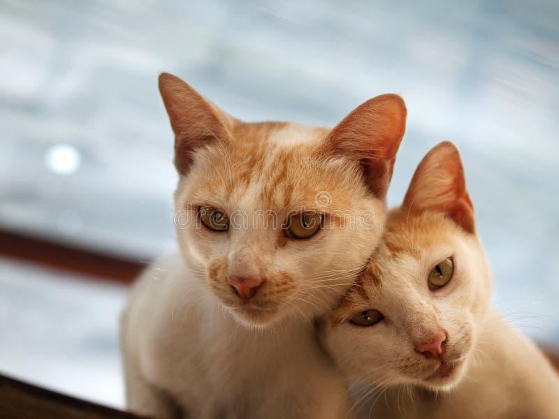 COUPLE CAT LOOKING AT CAMERA