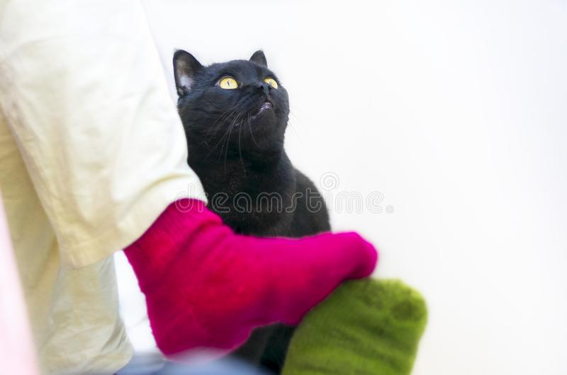 Couple in Colorful Woolen Knitted Socks Touching Each Other Feet. Black Cat Watching.  People Relaxing At Home in Cold Season. Christmas, New Year, Love stock photo