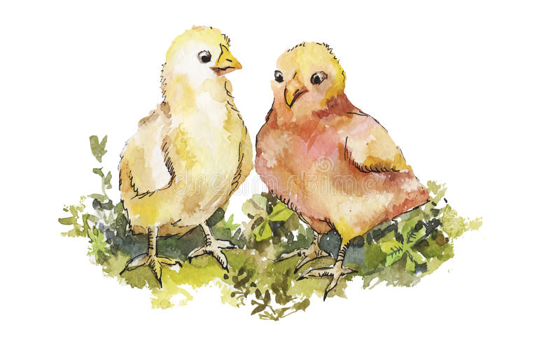 A couple of cute chickens on grass watercolor. Easter illustration for greeting card. stock illustration