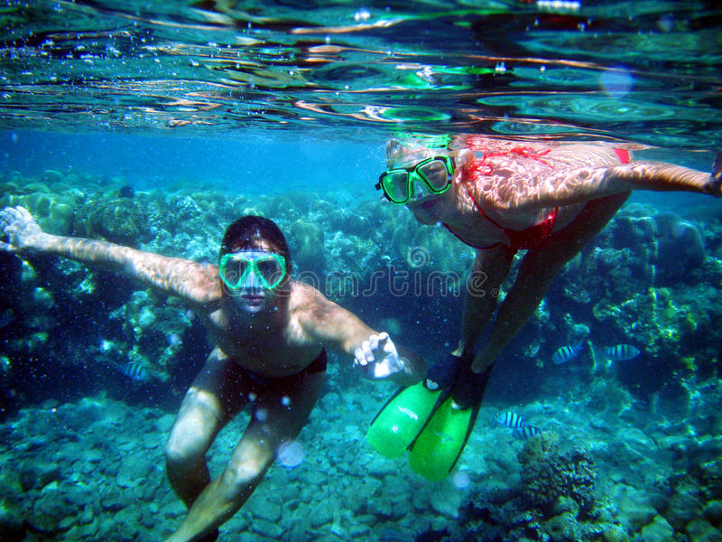 A couple of divers under water. Among of corals