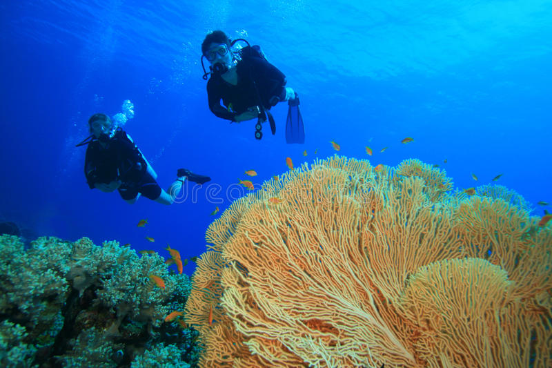Couple diving on coral reef. A couple scuba diving together on a coral reef