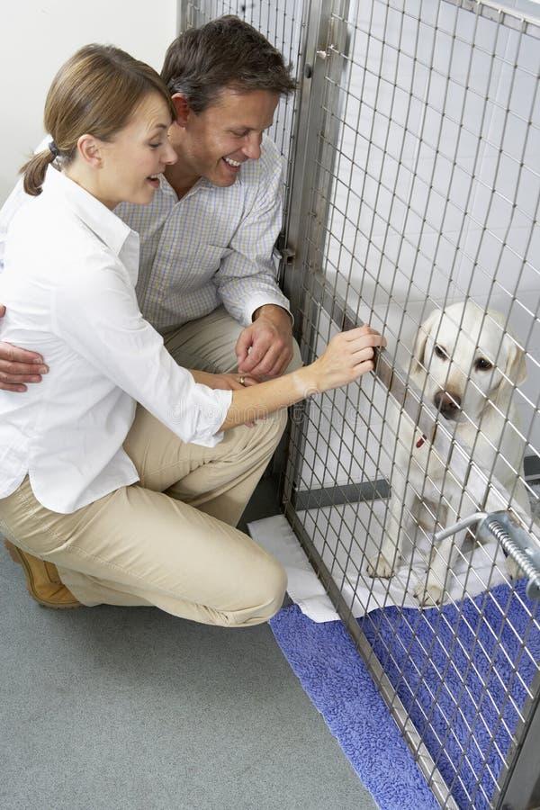 couple dog pet visiting στοκ φωτογραφία