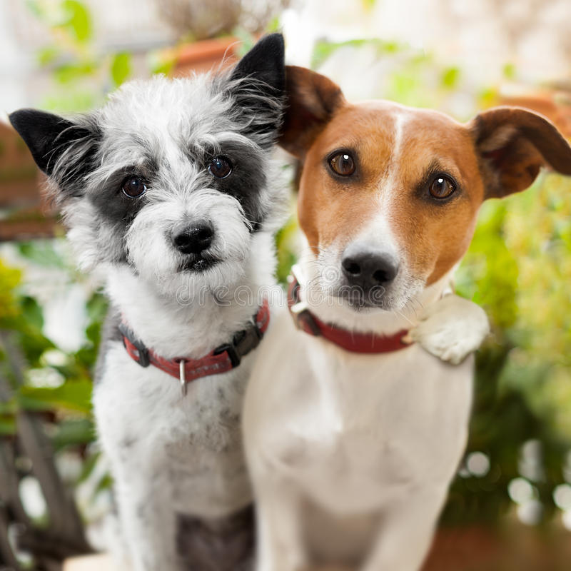 Couple of dogs in love at the park royalty free stock image