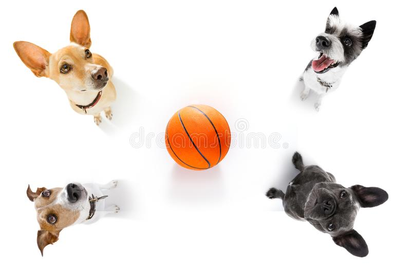 Basketball and group of dogs stock photo