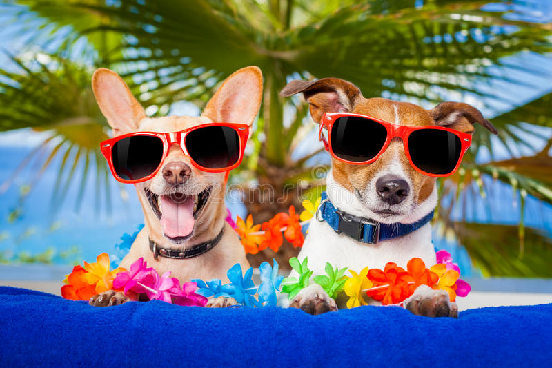 Couple of dogs stock photography