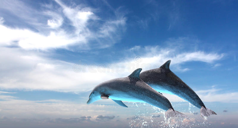 Couple Of Dolphins Jumping Against The Blue Sky. Ocean Life - Couple of dolphins jumping against the blue sky stock image