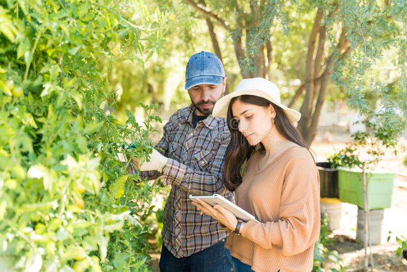 Couple Examining Plants With Digital Tablet In Garden royalty free stock image