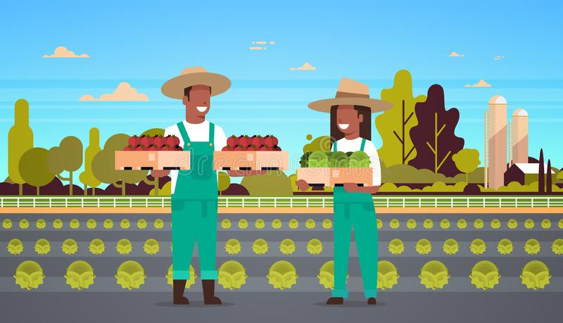 Couple farmers holding boxes red green tomatoes man african american woman harvesting vegetables eco farming concept. Farmland field countryside landscape full royalty free illustration