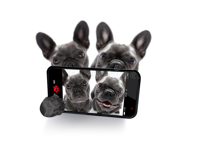 Couple of dogs selfie stock photos
