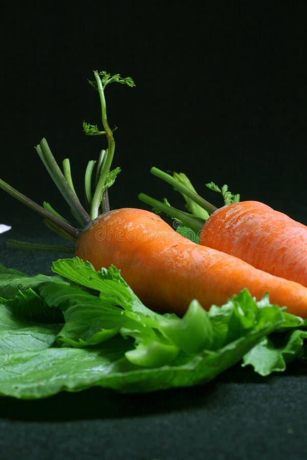 Couple fresh carrots stock photo