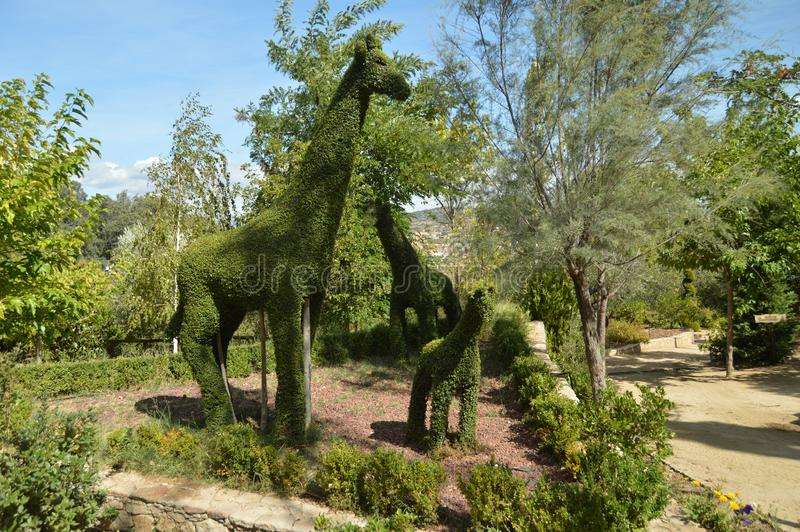 Couple Of Giraffes With Their Baby Recreated In A Fern Sculpture. royalty free stock photography