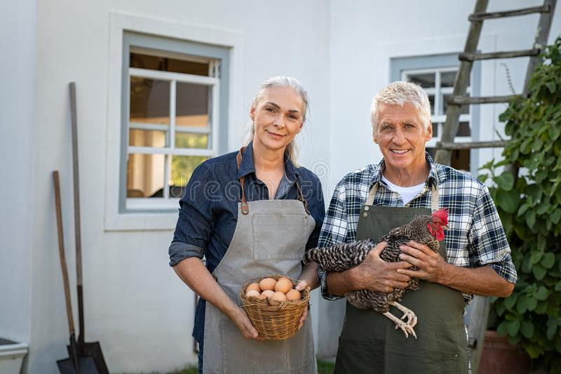 Couple of happy farmes holding eggs and hen stock image