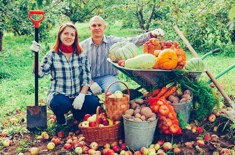 Couple with harvested vegetables in garden. Happy couple with harvested vegetables in garden stock photo