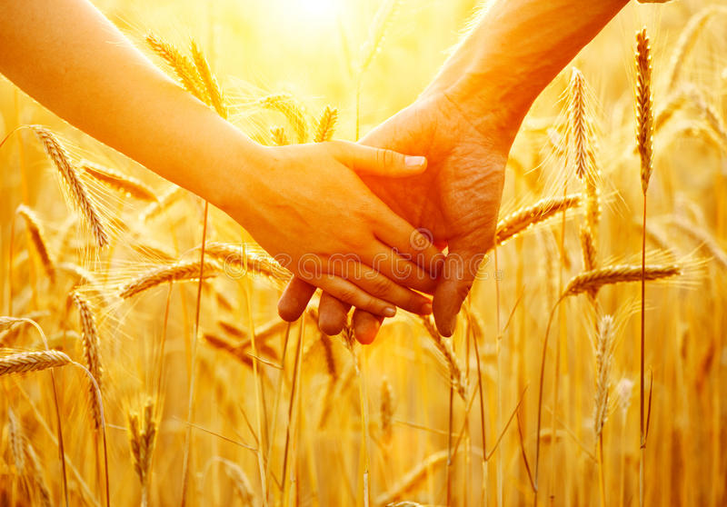 Couple holding hands and walking on golden wheat field. Over sunset royalty free stock photography
