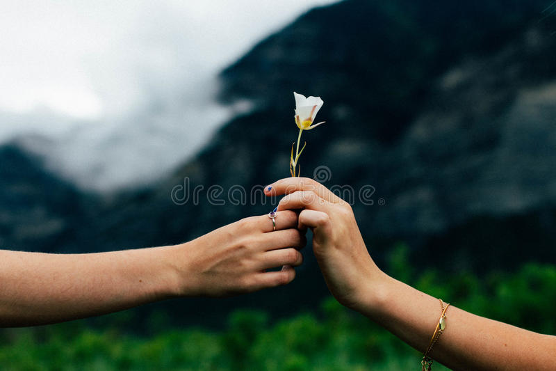 Couple Holding White Flower Free Public Domain Cc0 Image