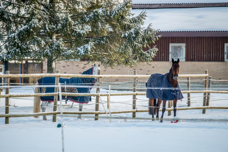 Couple of horses with clothes in winter royalty free stock photo