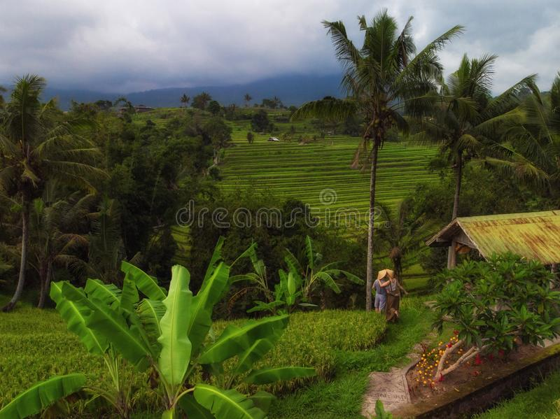 Couple at Jatiluwih rice terrace, Bali royalty free stock images