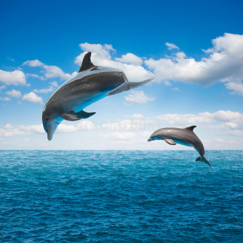 Couple of jumping dolphins. Beautiful seascape with deep ocean waters and cloudscape stock image