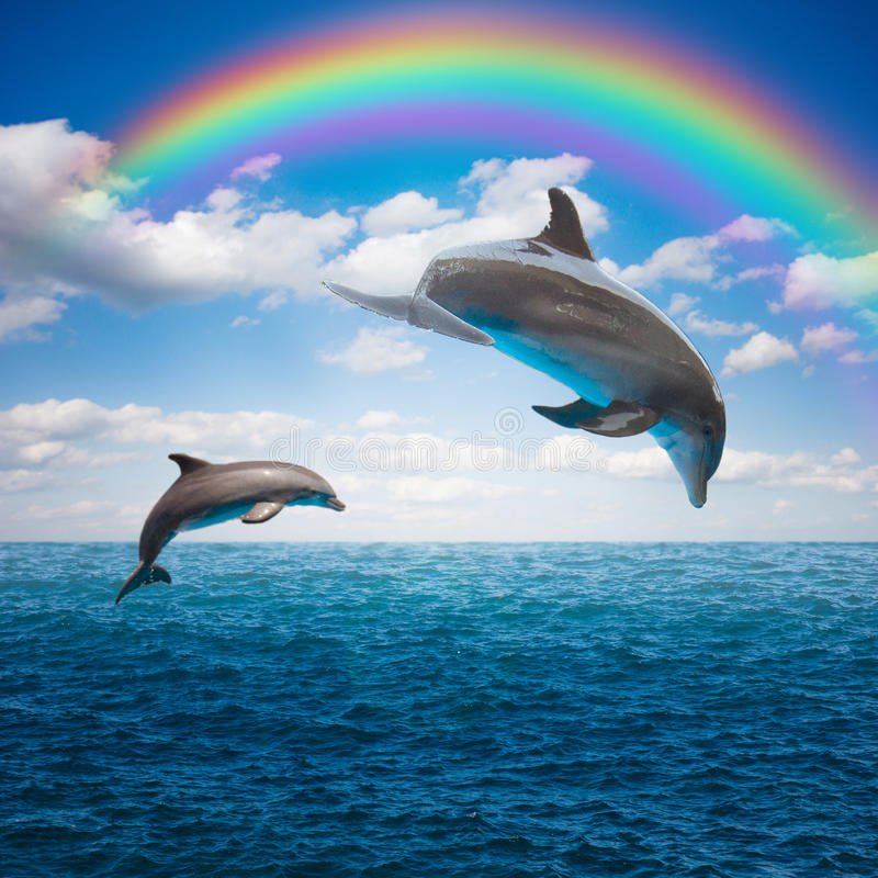 Couple of jumping dolphins. Beautiful seascape with rainbow in deep ocean waters and cloudscape stock images