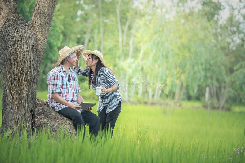 Couple kissing in nature royalty free stock photo