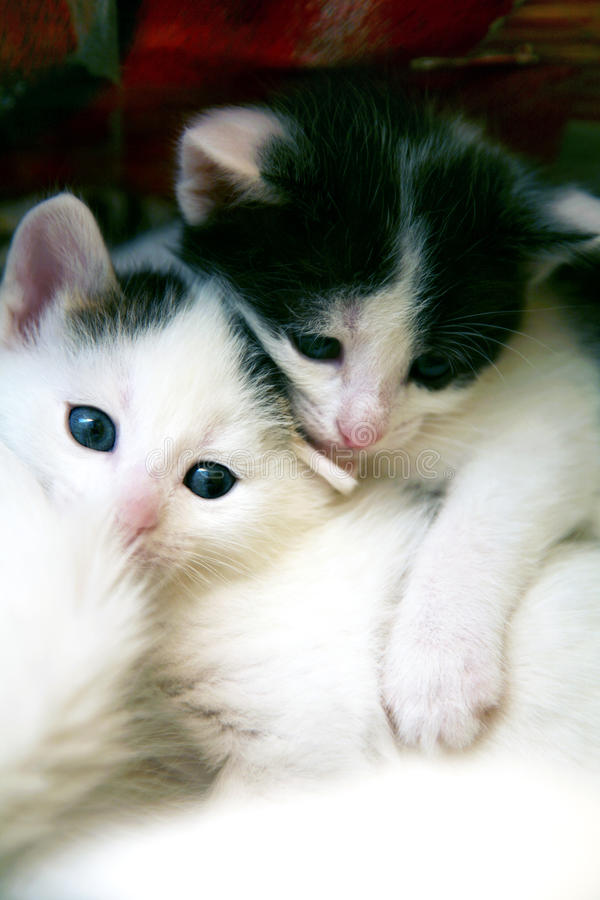 Couple of little funny kittens in game stock image