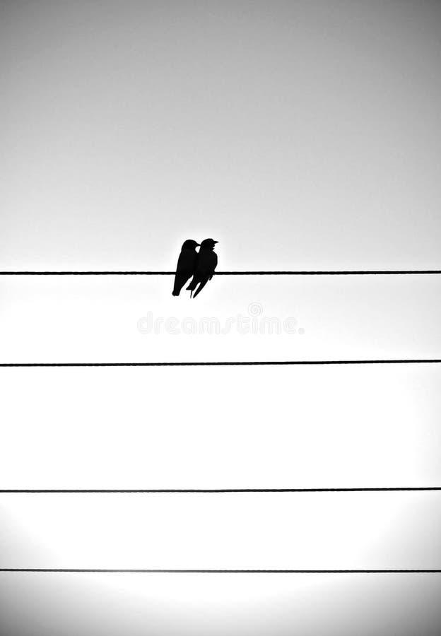 Couple of love birds on lines stock photos