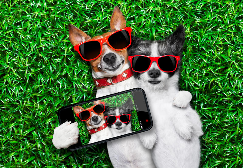 Couple in love. Couple of dogs in love very close together lying on grass taking a selfie