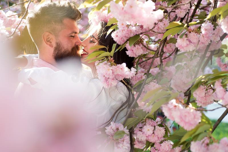 Couple in love kissing under blooming tree. Bearded man and pretty girl hiding in pink cherry blossom. Romantic date in. Spring flowering garden, idyllic scene stock photos