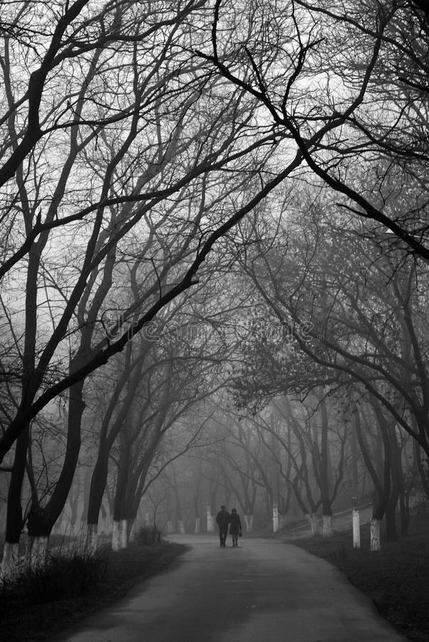 Couple in love walking in the park in the foggy mo. One couple in love walking on the road in the park with trees in the spring foggy morning royalty free stock photos