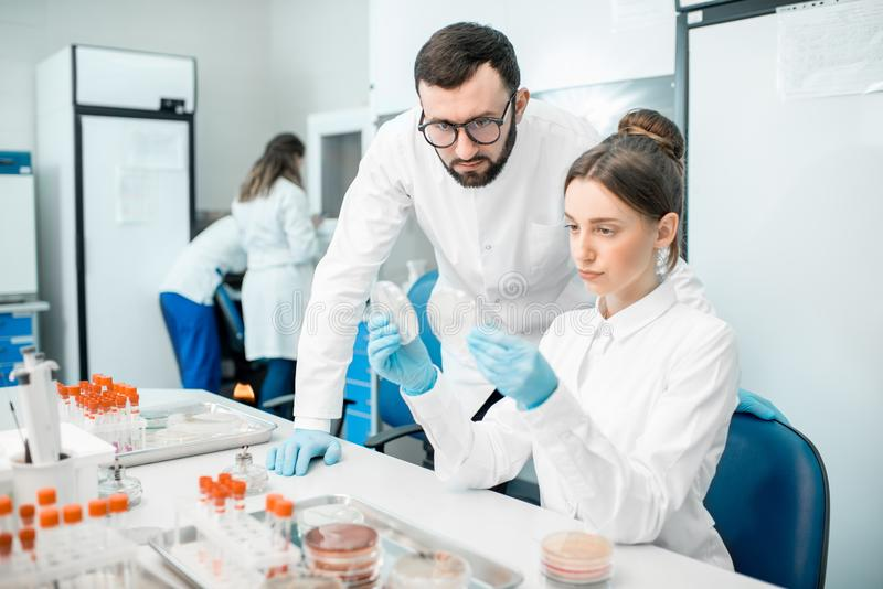 Laboratory assistants in the bacteriological department. Couple of medics in uniform looking on the effect of antibiotics on bacteria in Petri dishes making stock images