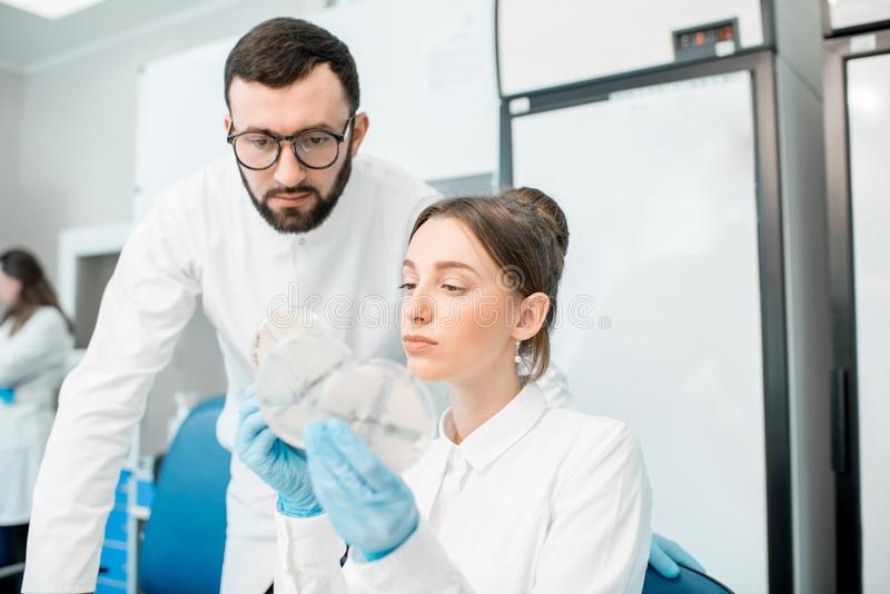 Laboratory assistants in the bacteriological department. Couple of medics in uniform looking on the effect of antibiotics on bacteria in Petri dishes making stock photo
