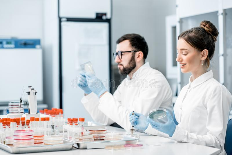Laboratory assistants in the bacteriological department. Couple of medics in uniform making bacteriological tests sitting in the modern laboratory royalty free stock images
