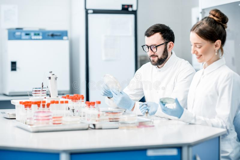 Laboratory assistants in the bacteriological department. Couple of medics in uniform making bacteriological tests sitting in the modern laboratory royalty free stock photo