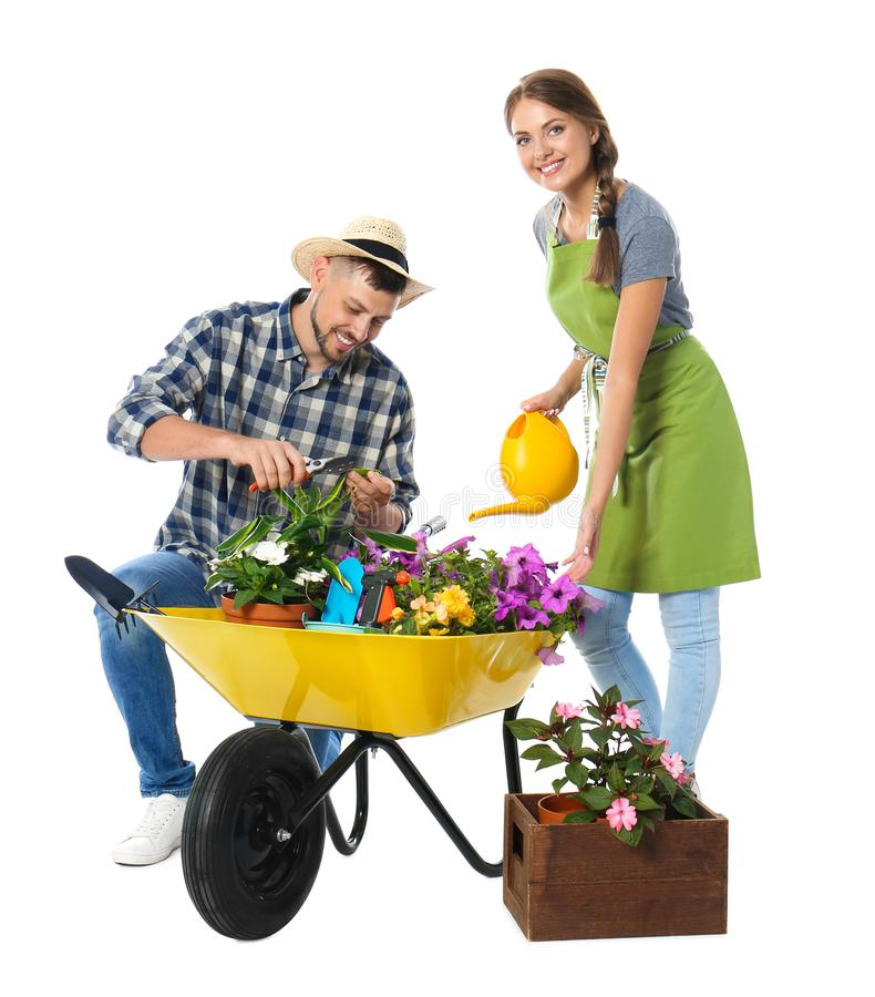 Free Couple Of Gardeners With Wheelbarrow And Plants On Background Stock Photos - 161048053