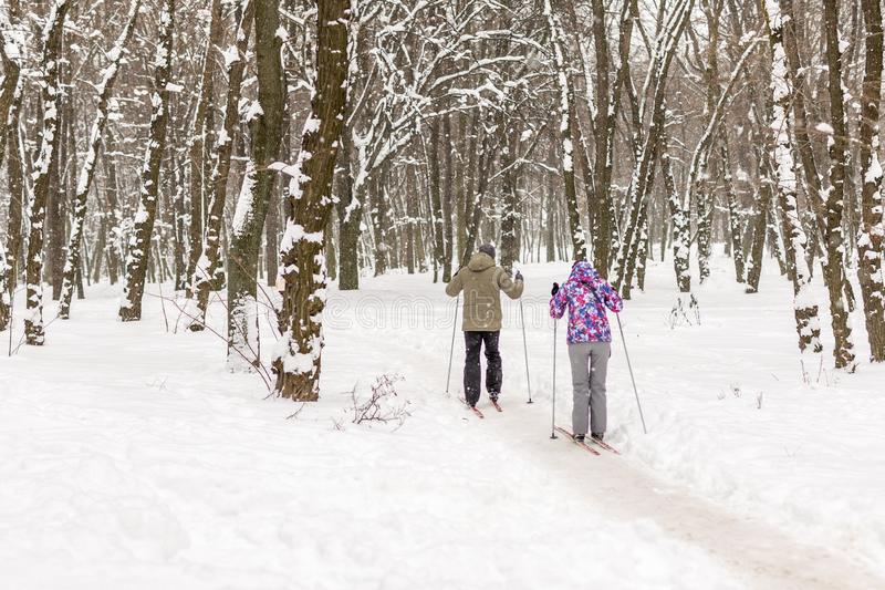Couple of people enjoying cross-country skiing in city park or forest in winter. Family Sport outdoor activities in winter season royalty free stock photography