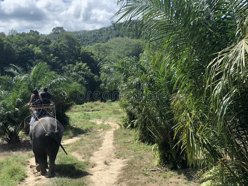 A couple of people riding an elephant during a tour for tourists in the jungle, rear view stock photography