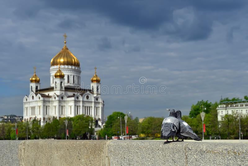 A couple of pigeons in front of the Cathedral of Christ the Savior. Moscow, Russia. A couple of pigeons pressing their heads to each other, sitting on the fence royalty free stock photos