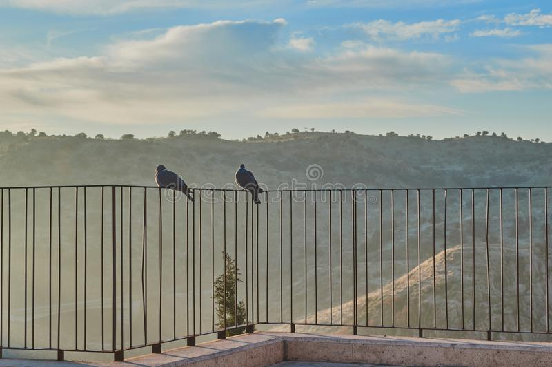 Couple of pigeons perched on railing of a viewpoint at sunrise in Toledo, Castilla La Mancha, Spain stock images