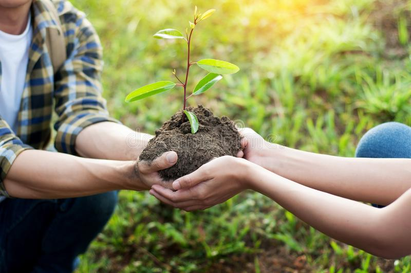 couple planting and watering a tree together on a summer day in royalty free stock photos