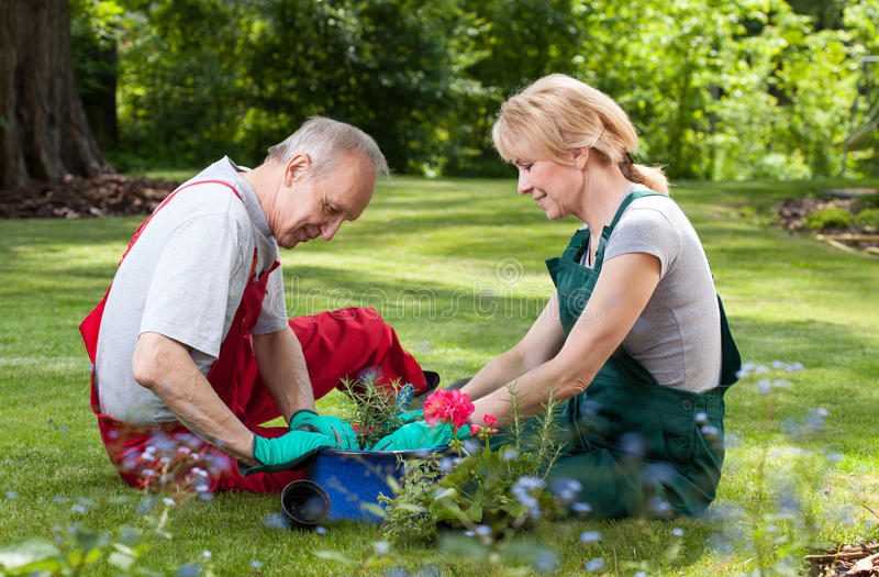 Couple spends his free time working in the garden. The happy couple spends his free time working in the garden royalty free stock photo