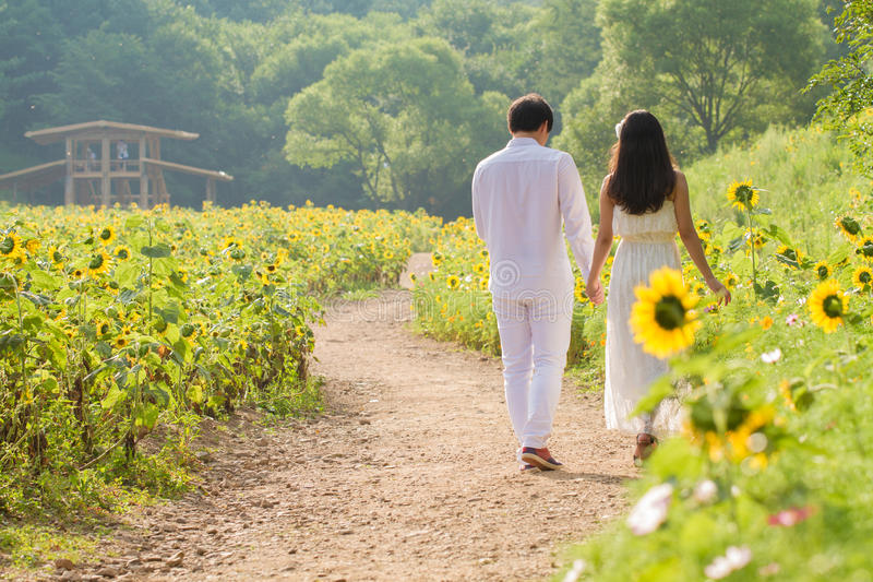 Couple in Sunflower field. A couple walking in the sunflower field royalty free stock photo