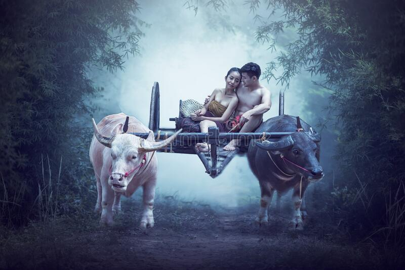 Couple Thai farmers family happiness time Buffalo yoke of peasant couples royalty free stock images