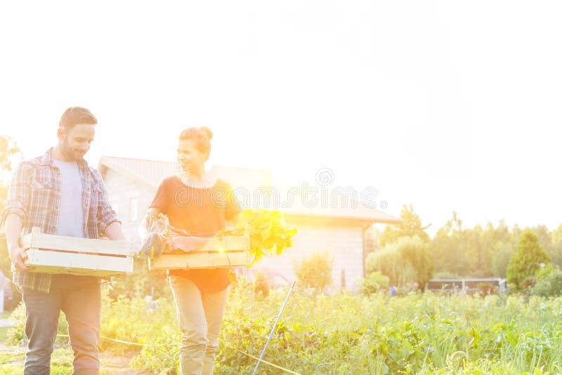 Couple transportant des légumes en caisse en marchant à la ferme contre le ciel avec la lentille jaune en arrière-plan photographie stock