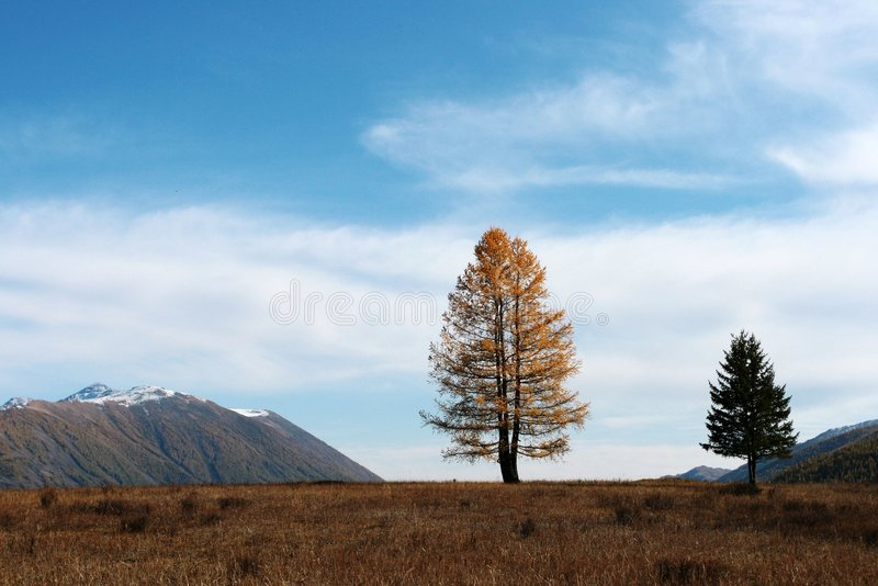 Couple Trees Stock Images