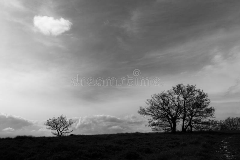 A couple of trees beneath a deep sky with an isolated cloud.  royalty free stock images