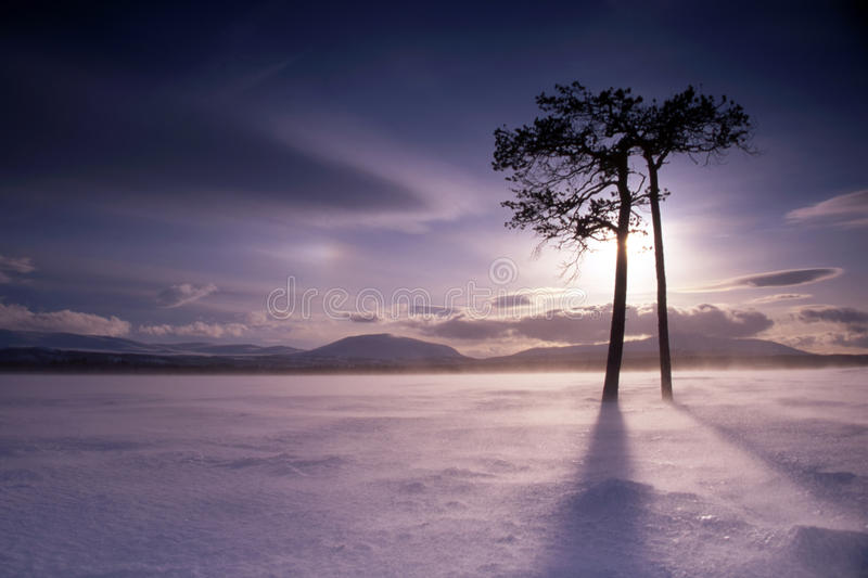 Couple of trees ob frozen lake stock images